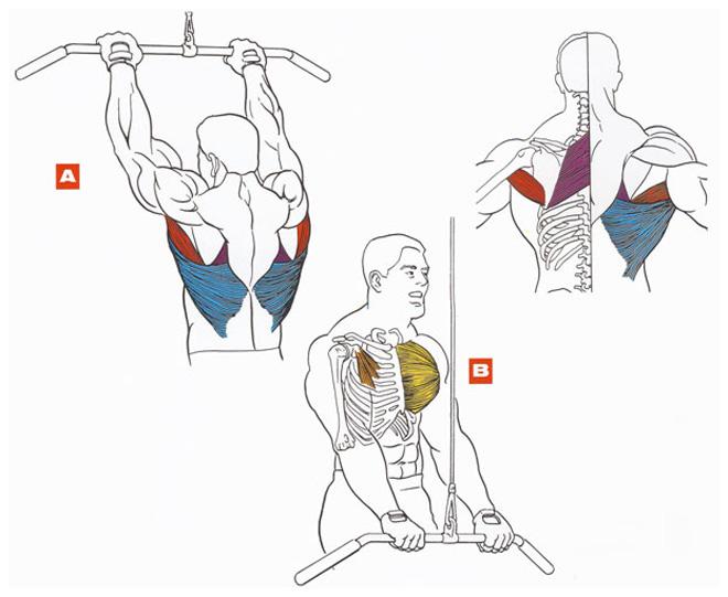 Упражнение для прокачки спины в домашних условиях