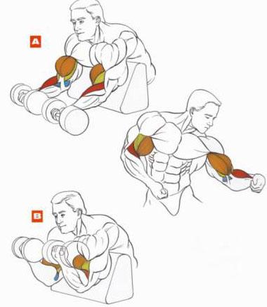 Как на качать мышцы своими руками