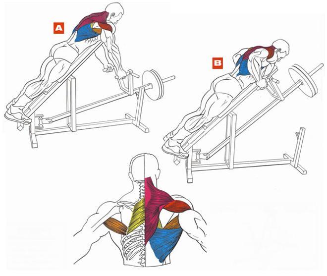 Накачать широкую спину в домашних условиях
